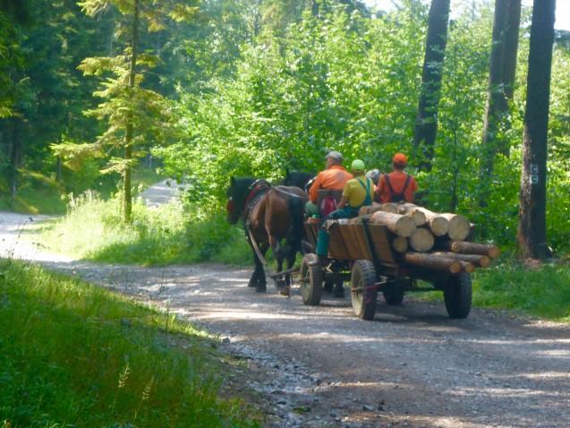 Pferdekutsche Slowakei ohne Pro Link